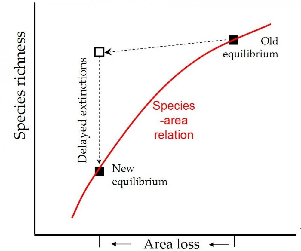 Delayed extinctions (image)